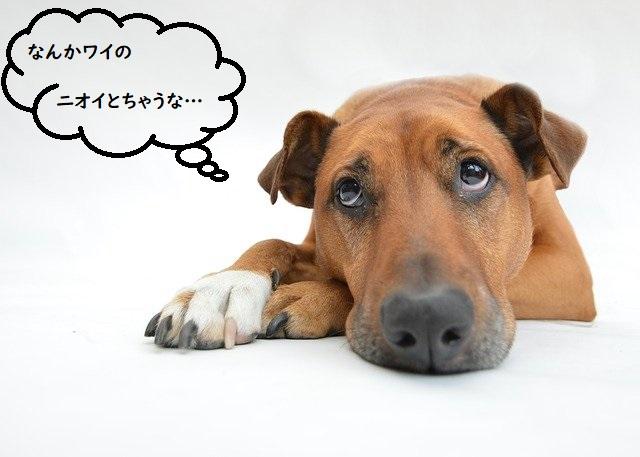 犬の心の声「なんかワイのニオイとちゃうな…」