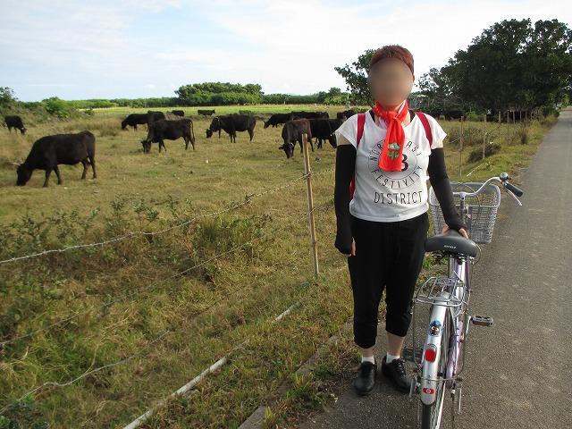 自転車と牛の群れ