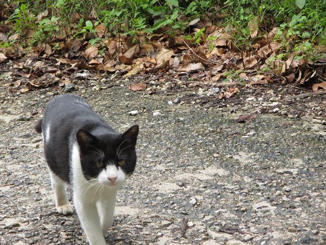白黒もようの猫