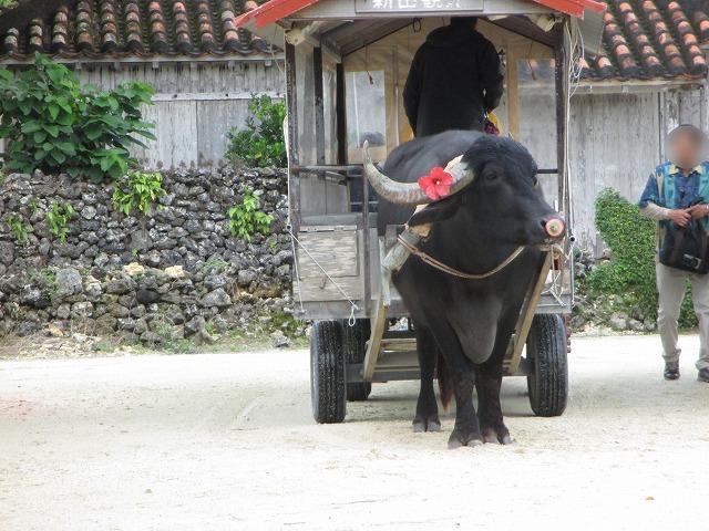 角にハイビスカスをつけた水牛