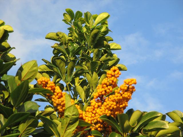 黄色い小さな実をつけた植物