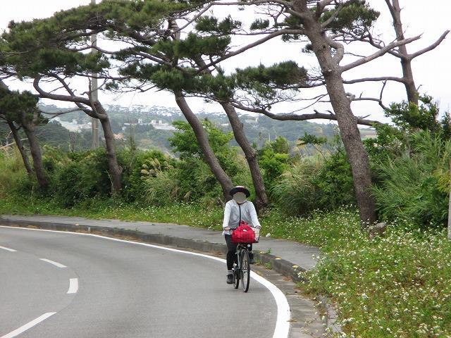 坂道を自転車で登る女性1