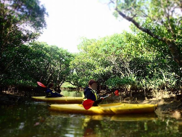 マングローブのトンネルとカヌーをこぐ女性